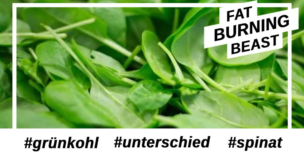 Was ist der Unterschied von Grünkohl und Spinat?